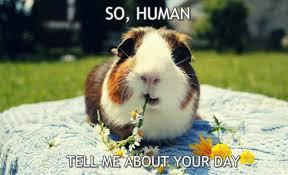Guinea Pig Meme - so human tell me about guinea pig meme virily