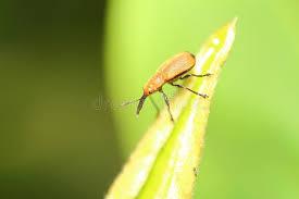 was ist das für ein insekt eine wanze oder was urlaub insekten wanze und kleines insekt stockbild bild insekte 55392105