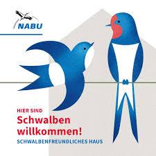 wanzen nabu aktion schwalbenschutz nabu gruppe hambrücken