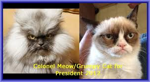 Colonel Meow Memes - image 419722 colonel meow know your meme