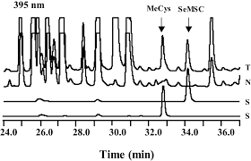 molecular and biochemical characterization of the selenocysteine