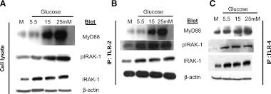 high glucose induces toll like receptor expression in human