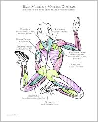Body Anatomy Back Human Anatomy Charts Page 29 Of 351 Inner Body Anatomy Muscle