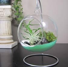 impressive glass terrarium globes 41 glass globe terrarium diy