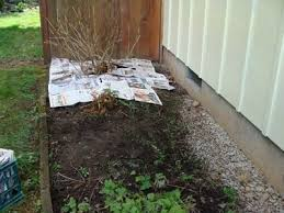 How To Start A Flower Garden In Your Backyard 5 Easy Steps To Organic Weed Control For Beds U0026 Borders