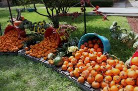 autumn pumpkin wallpaper autumn pumpkin wallpaper free here