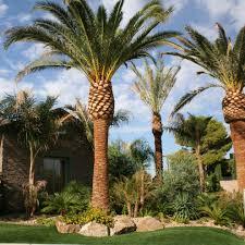 las vegas backyard landscape transitional with contemporary