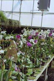 flower wholesale s birmingham wholesale florist alabama flowers