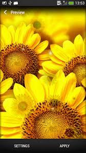 foto wallpaper bunga matahari bunga matahari gambar animasi untuk android download gratis com