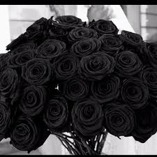 Black Rose Flower 60 Best Roses Are Red Images On Pinterest Black Roses Black