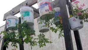 Upside Down Tomato Planter by Millennium Ark News