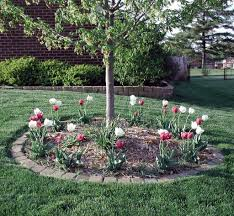 hoe and garden pictures tulips around a tree