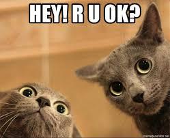 Ru Ok Meme - hey r u ok curious cats meme generator