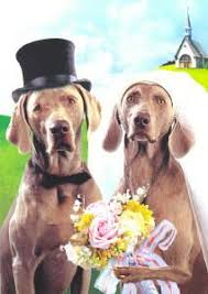 the weimaraner shop stationery and greeting cards