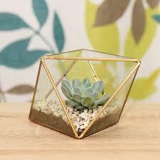 gold faceted succulent terrarium kit by dingading terrariums