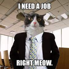 Cat In Suit Meme - ranch animals and supplies barn cats available classified ads bay