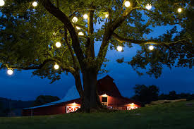 outdoor hanging tree lighting illuminate
