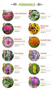 native plants that attract butterflies top 30 plants that attract pollinators