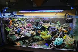 vasche acquario un acquario marino merita un sistema di 2 vasche