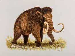 83546 jpg 400 280 twn megafauna species herbivores