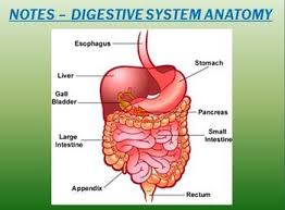 109 best digestion images on pinterest life science teaching