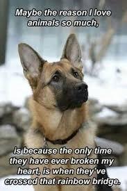 australian shepherd quotes want one sooooo bad u003c3 u003c3 u003c3 u003c3 those eyes those spots the