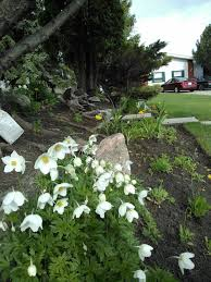 72 best zone 3 flowers images on pinterest gardening beautiful