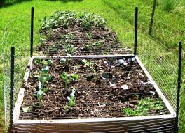 easy raised beds gardening plans u2014 emerson design how to plant