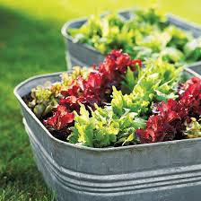 Container Gardening For Food - simple salad garden containers growing vegetables salad and