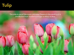 Pictures Of Beautiful Flowers In The World - 10 most beautiful flowers in the world