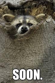 Meme Soon - soon stalker raccoon quickmeme