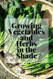Shade Garden Vegetables by Growing Shade Garden Vegetables And Herbs Best How To Grow