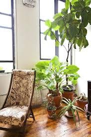 plants indoors indoors plants plants indoors benefits cursosfpo info
