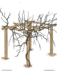 Trellis For Wisteria Pruning And Training Wisteria Fine Gardening