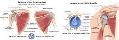 Human Shoulder Diagram Shoulder Disorders And Treatment Fort Worth Surgeons At Osmi