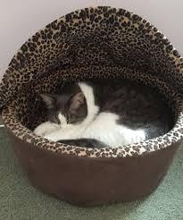 heated cat beds cat climbing trees u0026 modern cat furniture