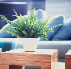 5 easy ways to make your living room healthier
