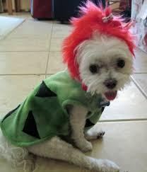 Yorkie Costumes Halloween Designer Handmade Cave Dog Halloween Costumes Small Toy