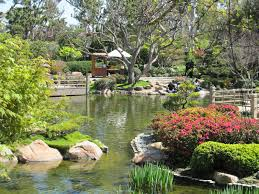 japanese garden pictures earl burns miller japanese garden at cal state long beach events