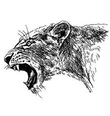 lioness vector images over 430