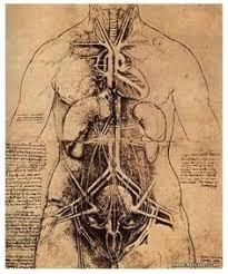 chaosophia218 anatomy pinterest body reference anatomy and