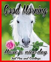 Have A Nice Day Meme - fresh good morning have a nice day quote with a horse morning good