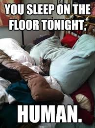 Sleeping Cat Meme - cat sleeping in your spot funny cats dump a day