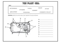 cells worksheet packet w answer keys plant and animal cells tpt