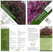 Lilca by Amazon Com Bloomerang Dark Purple Reblooming Lilac Syringa Live