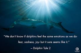 quote joy movie what is your favorite dolphin tale quote dolphin tale dolphin