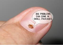 How To Check For Bed Bugs At Hotel Bed Bugs Signs In Hotels False Online Reports Of Bed Bug Can Be A