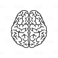 brain anatomy coloring book human brain outline top view stock vector art 515307322 istock