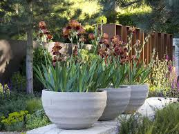 Plants And Planters by 10 Ideas For Using Large Garden Containers Hgtv