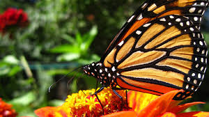 butterfly symbolic meaning whispers channels prophecies visions